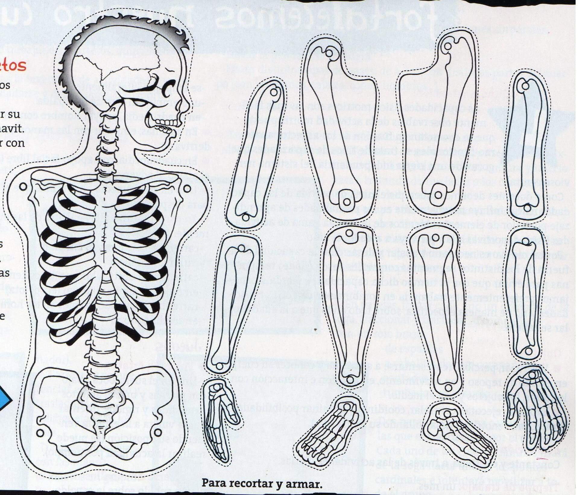 El esqueleto en educación primariaEducación Primaria